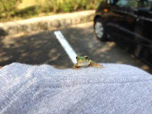 父の肩にカエルが…。